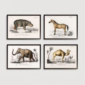 Bộ 4 tranh khung kính treo tường Mammals