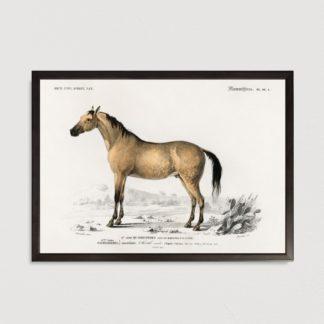 Bộ 4 tranh khung kính treo tường Mammals 35x45 cm/tranh