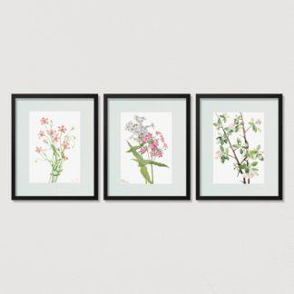 Bộ 3 tranh khung kính treo tường Jasmine Flower