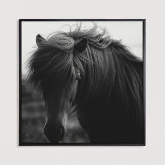 tranh-canvas-treo-tuong-Black-horse