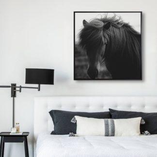 Black horse - Tranh Canvas treo tường