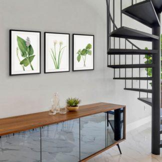 Bộ 3 tranh khung kính treo tường Green Leaf 40x60 cm/tranh