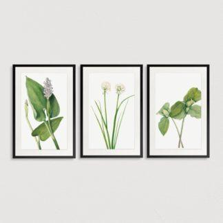 Bộ 3 tranh khung kính treo tường Green Leaf
