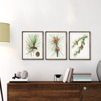 Bộ 3 tranh khung kính treo tường Quả thông 40x60 cm/tranh