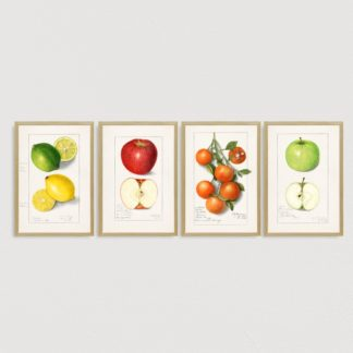 Bộ 4 tranh khung kính treo tường Colourful fruit