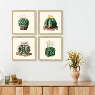 Bộ 4 tranh khung kính treo tường Xương rồng 30x30 cm/tranh