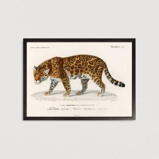 Tranh khung kính treo tường Leopard