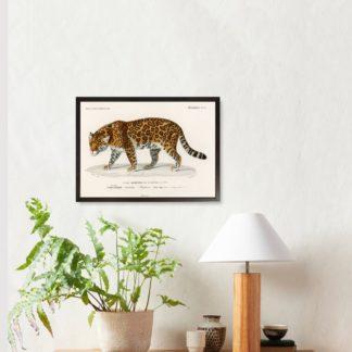 Tranh khung kính treo tường Leopard 35x45 cm