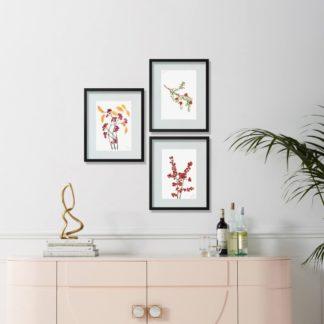 Bộ 3 tranh khung kính Ribes nigrum