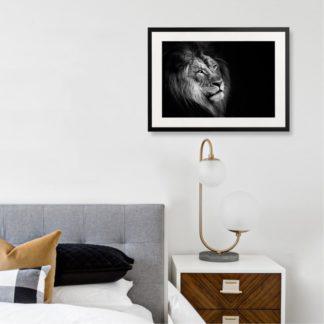 African Lion - Tranh khung kính treo tường B&W