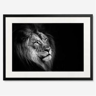 tranh-khung-kinh-b&w-African Lion