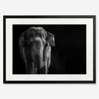tranh-khung-kinh-treo-tuong-Asian-Elephant
