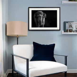Asian Elephant - Tranh khung kính treo tường B&W