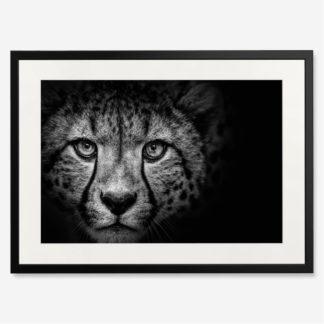 tranh-khung-kinh-treo-tuong-Cheetah