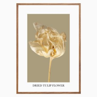 Poster-Dried-tulip-flower-3