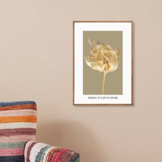 Poster Dried Tulip Flower 3