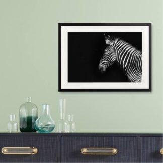 Grevy's Zebra - Tranh khung kính treo tường B&W