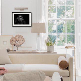 Lowland Gorilla - Tranh khung kính treo tường B&W