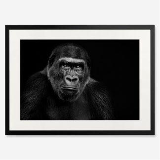 tranh-khung-kinh-treo-tuong-Lowland-Gorilla