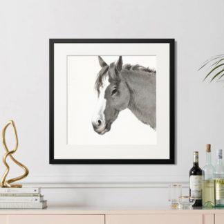 Horse portrait - Tranh khung kính treo tường B&W