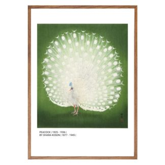 Poster Peacock