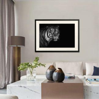 Sumatran Tiger on black  - Tranh khung kính treo tường B&W