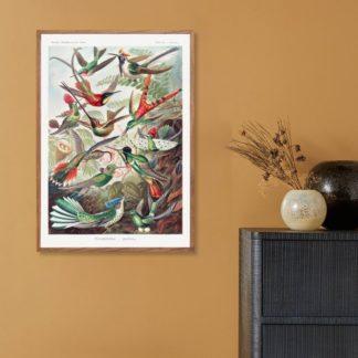 Poster Trochilidae–Kolibris From Kunstformen Der Natur (1904)