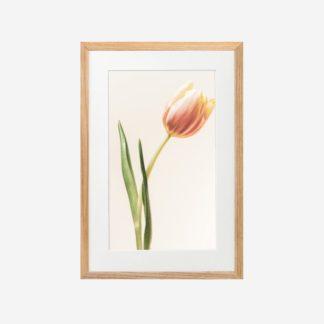 Tulip - Tranh khung kính treo tường 21x30cm