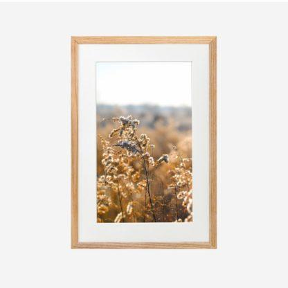 Đón Nắng - Tranh khung kính gỗ sồi treo tường 21x30cm