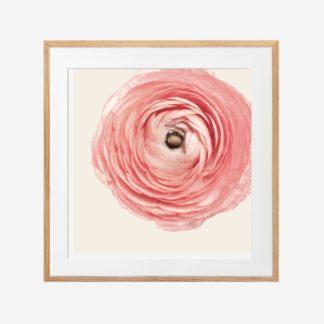 Rose bud - Tranh khung kính treo tường 30x30cm