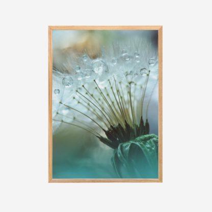 Giọt Sương - Tranh khung kính treo tường 30x42cm