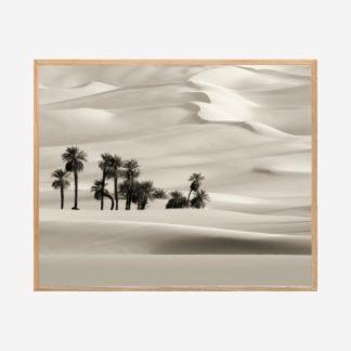 Desert - Tranh khung kính gỗ sồi treo tường 40x50 cm