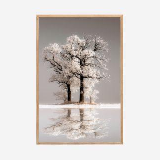 Reflection - Tranh khung kính gỗ sồi treo tường 40x60 cm