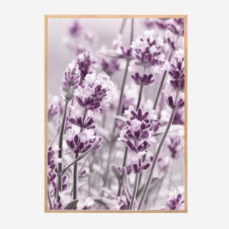 Purple Flowers - Tranh khung kính treo tường 50x70cm