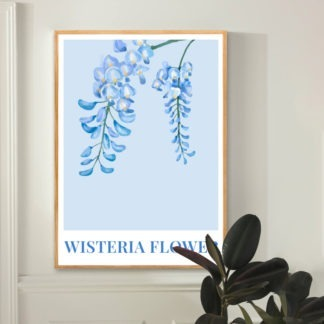 Poster Wisteria Flower