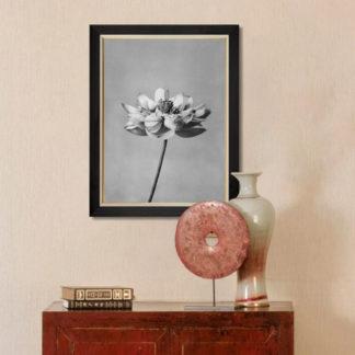 Lotus flowers - Tranh in khung kính gỗ sồi Nhật cổ Danh họa Ogawa Kazumasa (1860-1929) 60x80 cm