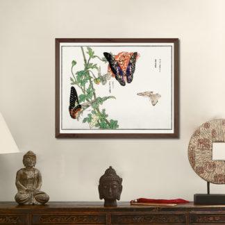 Butterflies and Plant (1910) - Tranh in khung kính gỗ sồi Nhật cổ Danh họa Morimoto Toko 56×45cm
