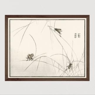 Suzumushi bell cricket Tranh in khung kính gỗ sồi Nhật cổ Danh họa Morimoto Toko 56×45cm