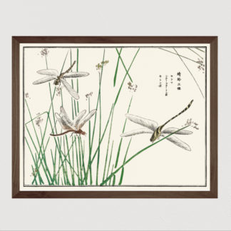 Dragonflies illustration from Churui Gafu - Tranh in khung kính gỗ sồi Nhật cổ Danh họa Mochizuki Gyokusen