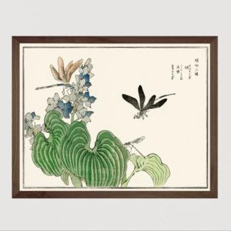 Dragonfly on a flower (1910)- Tranh in khung kính gỗ sồi Nhật cổ Danh họa Morimoto Toko 56×45cm