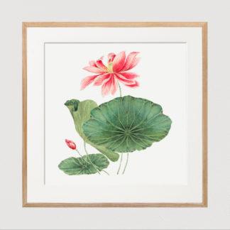 Japan Lotus - Tranh in khung kính khung gỗ sồi