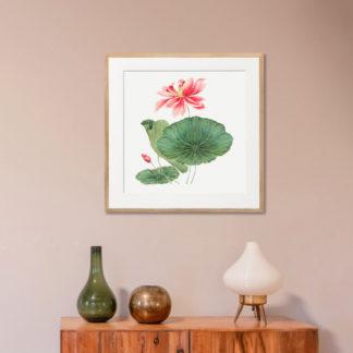 Japan Lotus - Tranh in khung kính gỗ sồi 60x60 cm